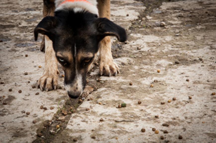 Γιάννενα: Βήματα μπροστά στη διαχείριση των αδέσποτων ζώων